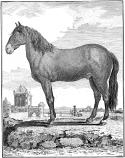 horsie08.png
