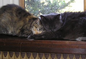 Little Girl Cat and Fuzzy-Wuzzy